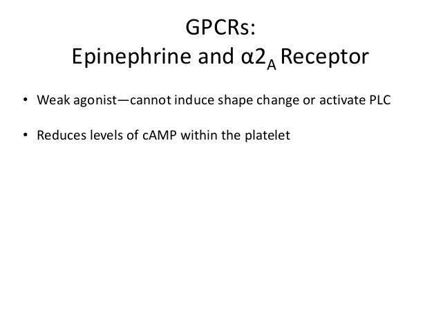 Adhesion  Integrin Activation and Platelet Aggregation  Secretion GPCRs activation Ca++, PKC  Fibrinogen  GP IIb/IIIa (αII...