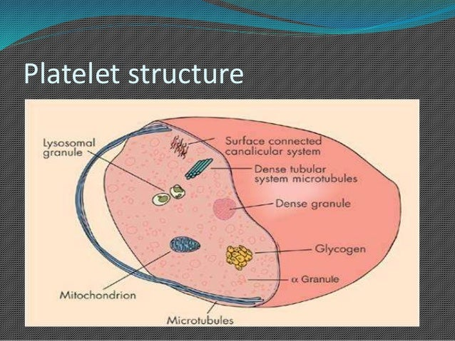 Blood cells |Platelets Diagram Gcse