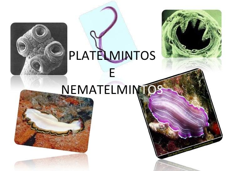 PLATELMINTOS E NEMATELMIN TOS