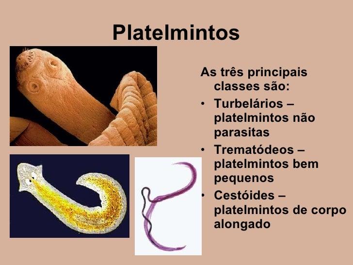 El estreptococo es al parásito