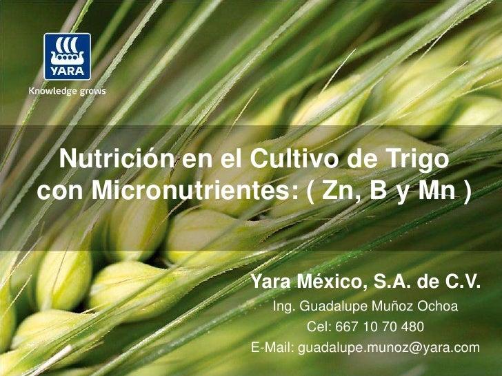 Nutrición en el Cultivo de Trigocon Micronutrientes: ( Zn, B y Mn )                 Yara México, S.A. de C.V.             ...