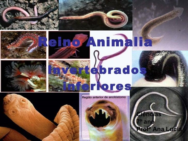 Reino Animalia Invertebrados inferiores Ciências 7º ano Profª Ana Lucia