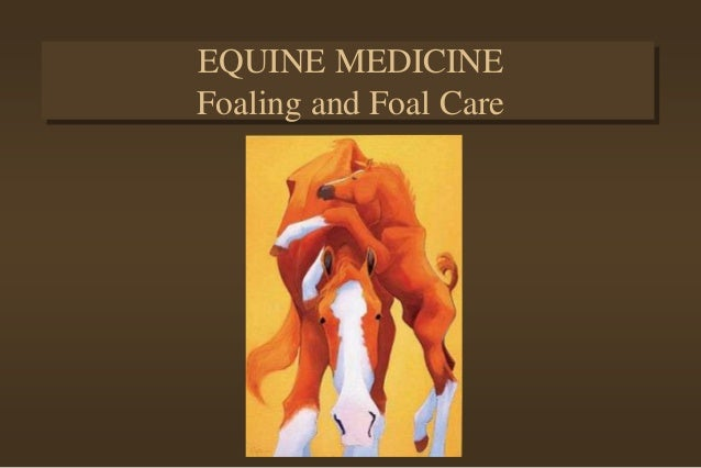 EQUINE MEDICINE Foaling and Foal Care