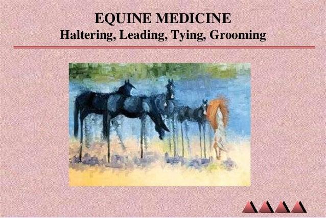 EQUINE MEDICINE Haltering, Leading, Tying, Grooming