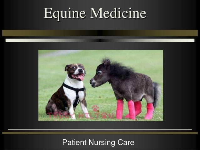 Equine Medicine Patient Nursing Care