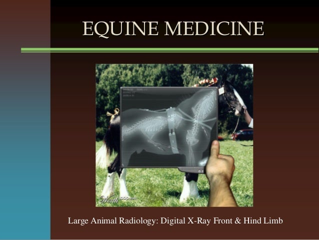 EQUINE MEDICINE Large Animal Radiology: Digital X-Ray Front & Hind Limb