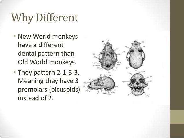 Animal teeth record how species live and die | ScienceNordic
