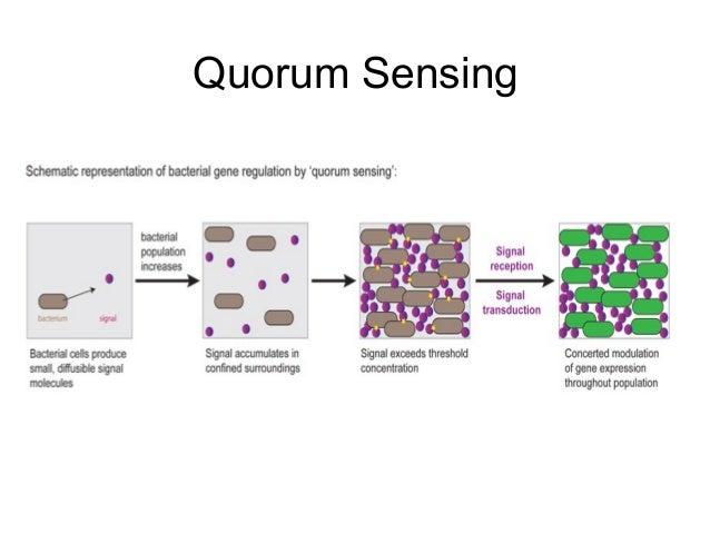 Quorum Sensing y Estrés Oxidativo en Bacillus cereus (revisión)