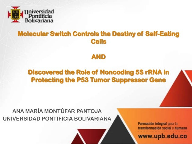 Molecular Switch Controls the Destiny of Self-Eating Cells AND Discovered the Role of Noncoding 5S rRNA in Protecting the ...