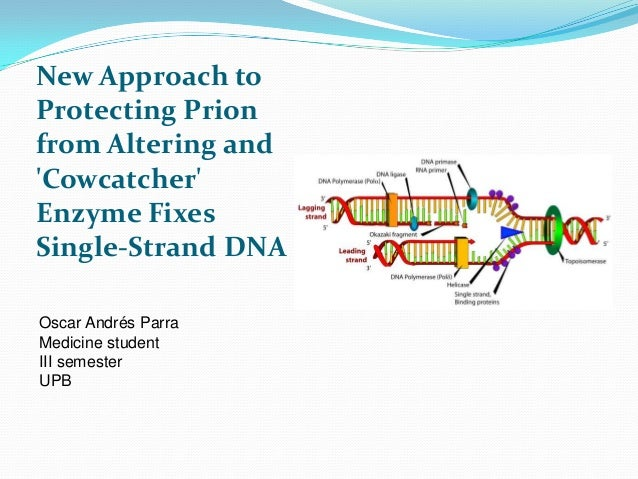 New Approach to Protecting Prion from Altering and 'Cowcatcher' Enzyme Fixes Single-Strand DNA Oscar Andrés Parra Medicine...