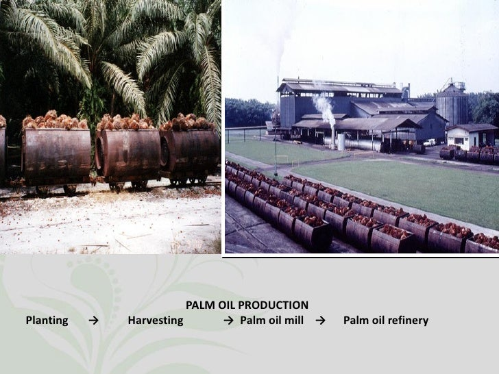 Oil Palm Industry in Malaysia Slide 2