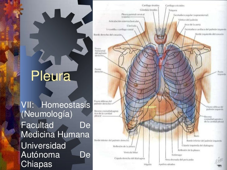 PleuraVII: Homeostasis(Neumología)Facultad     DeMedicina HumanaUniversidadAutónoma     DeChiapas