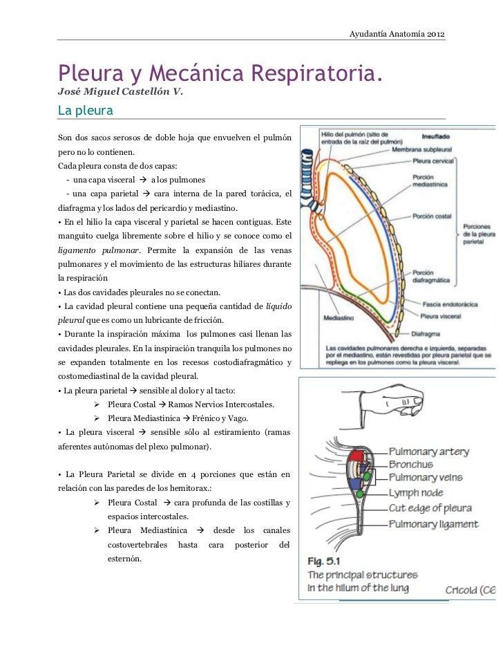 Ayudantía Anatomía 2012Pleura y Mecánica Respiratoria.José Miguel Castellón V.La pleuraSon dos sacos serosos de doble hoja...