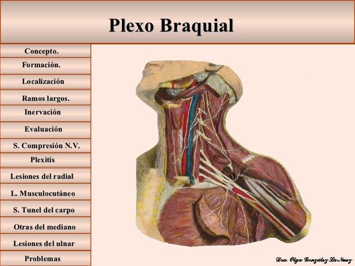 Plexo Braquial Formación. Ramos largos. Inervación Lesiones del radial L. Musculocutáneo S. Tunel del carpo Otras del medi...