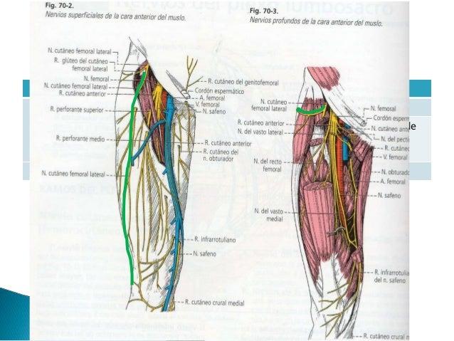 Plexo lumbosacro (2)