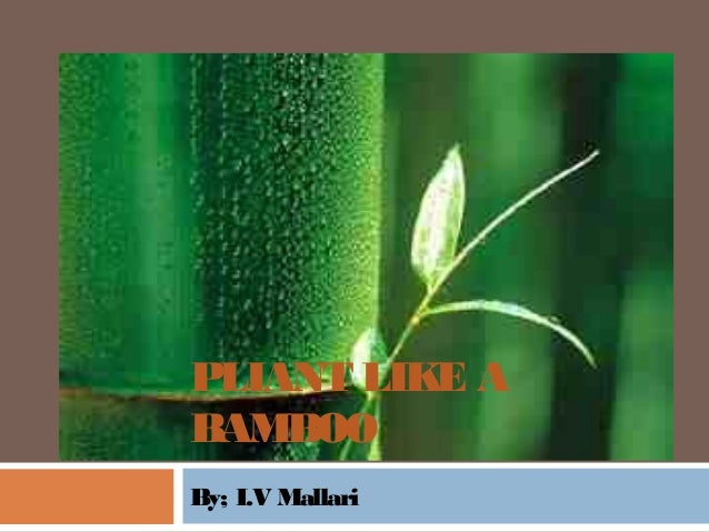 Plant like a bamboo essay format