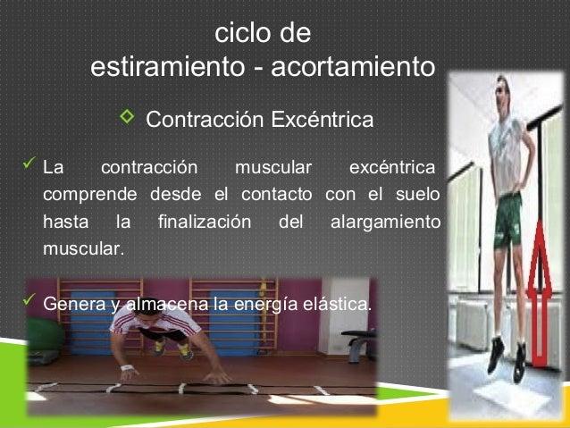 ciclo de  estiramiento - acortamiento   Contracción Excéntrica   La contracción muscular excéntrica  comprende desde el ...