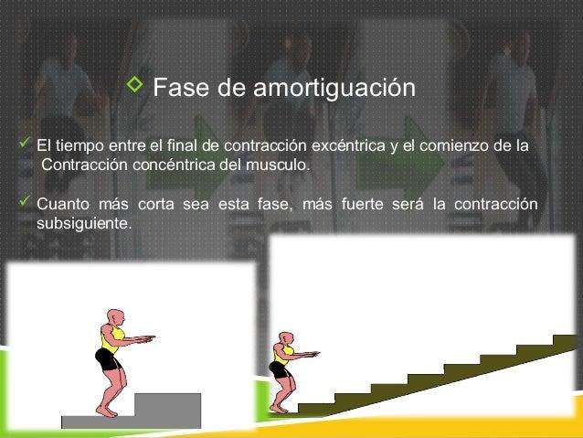  Fase de amortiguación   El tiempo entre el final de contracción excéntrica y el comienzo de la  Contracción concéntrica...