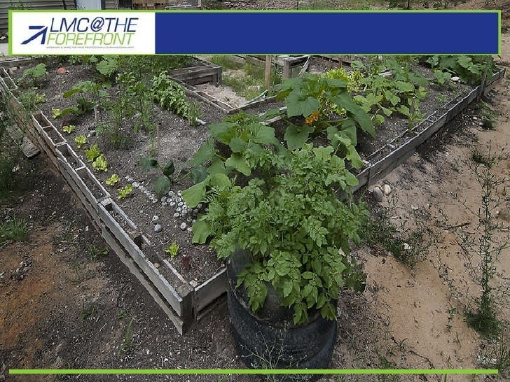 Gardening vs Fast Food pt1