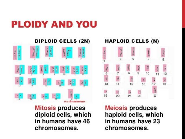 haploid sex cells name in Kalgoorlie