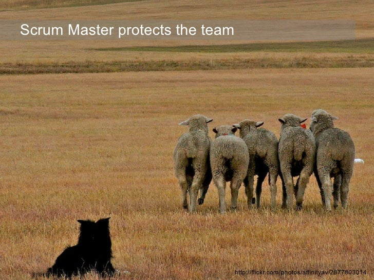 Scrum Master protects the team                                      http://flickr.com/photos/affinityav/2877803014