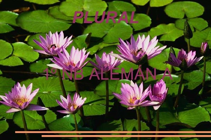 PLURAL 1º NB ALEMÁN A