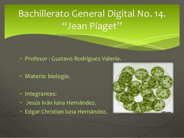 Profesor : Gustavo Rodríguez Valerio.Materia: biología.Integrantes:Jesús Iván luna Hernández.Edgar Christian luna Hernánde...