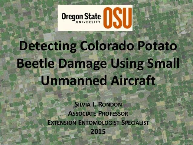 Detecting Colorado Potato Beetle Damage Using Small Unmanned Aircraft SILVIA I. RONDON ASSOCIATE PROFESSOR EXTENSION ENTOM...