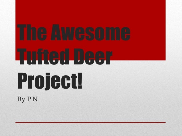 The Awesome Tufted Deer Project! By P N