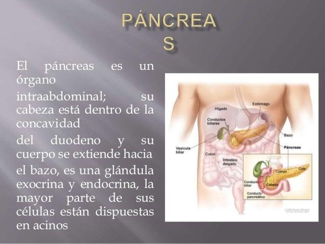 El páncreas es un órgano intraabdominal; su cabeza está dentro de la concavidad del duodeno y su cuerpo se extiende hacia ...