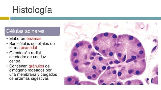 Patología de Páncreas