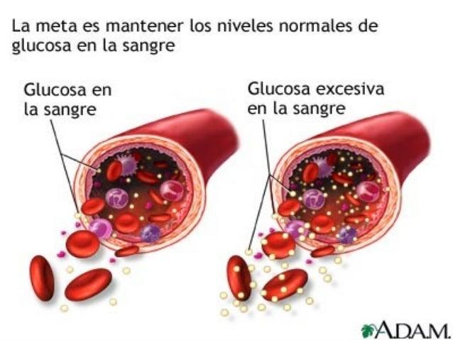 Biosíntesis de la insulina