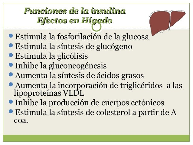 Radio Insulina / glucagón En condiciones basales: 2 Modificaciones por: - Ayuno --- 0.5 - Periodo postprandial: aumenta ...