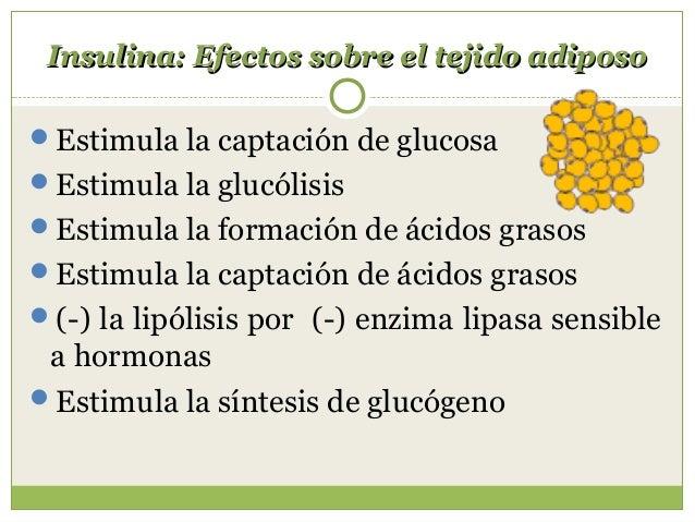 Efectos del glucagón Estimula la glucógenólisis ( estimula la glucógeno fosforilasa) Inhibe la síntesis de glucógeno Es...