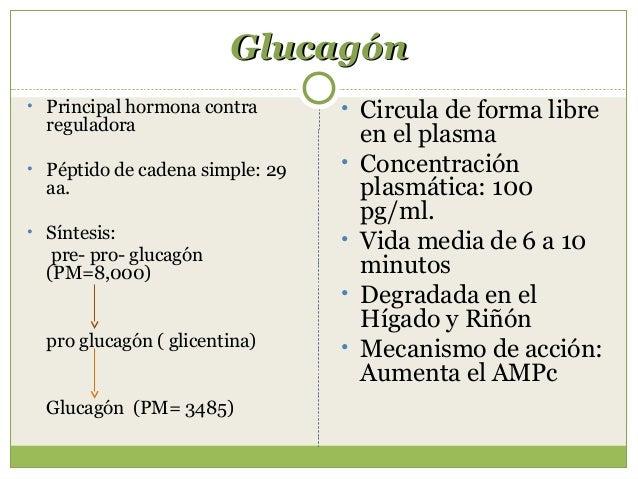 Efectos del glucagónEfectos del glucagón Inhibe la glicólisis Inhibe la lipogénesis Estimula la lipólisis Estimula la ...