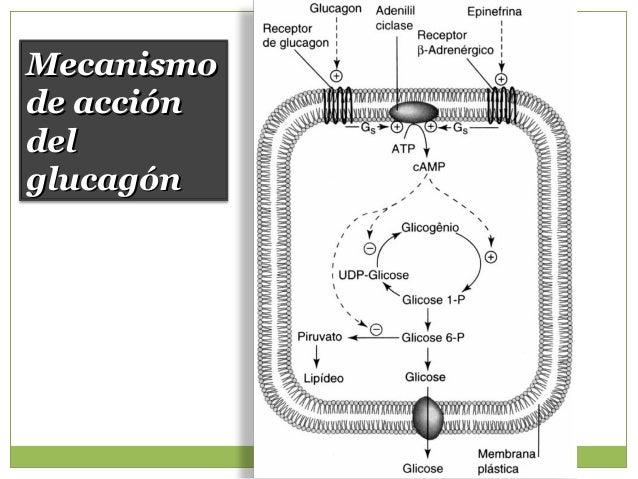 Otras hormonas contra reguladoras CatecolaminasCatecolaminas GlucocorticoidesGlucocorticoides Hormona delHormona del Creci...