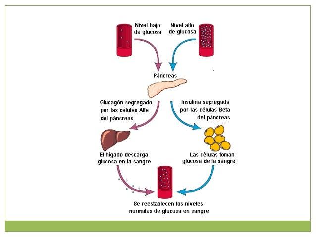 Glucosa – 6 - fosfato Síntesis de glucógeno Producción de glucosa Síntesis de ácidos nucléicos Acido pirúvico Metabolismo ...