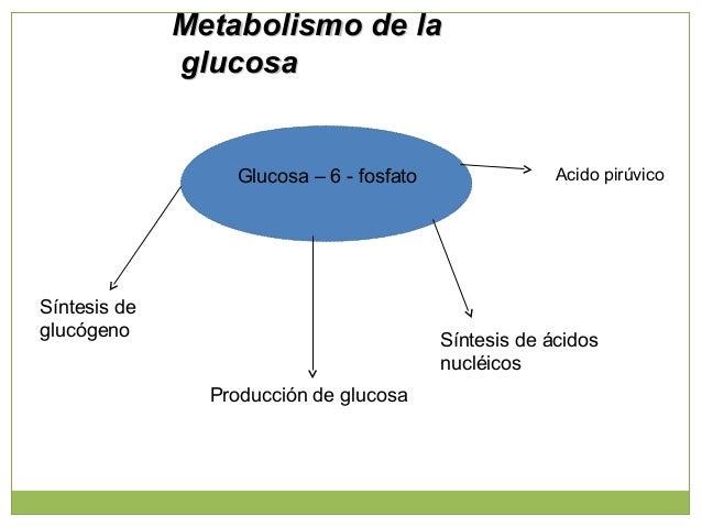 Piruvato Producción del acido láctico Producción de alanina Gluconeogenesis Acetil CoA Metabolismo de la glucosaMetabolism...