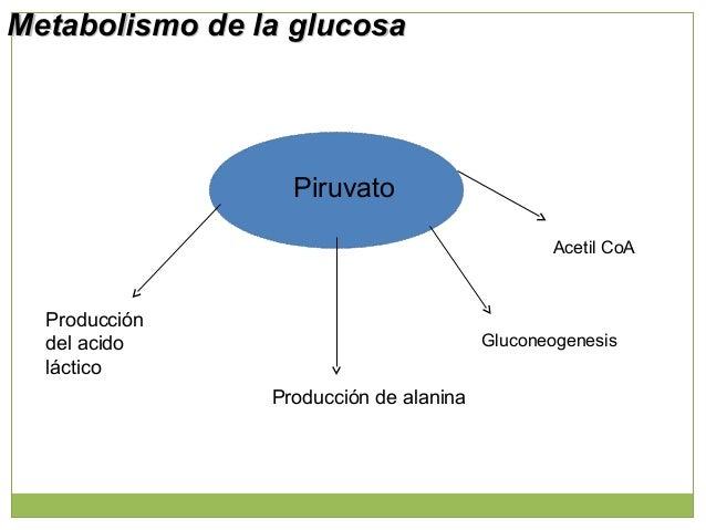 Acetil Co A Reacciones que generan cuerpos cetónicos Cetogénesis Malonil CoA Ácidos grasos + glicerol- 3 - P --- » TG - En...