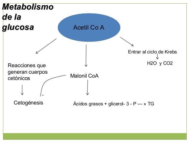 Balance de GlucosaBalance de Glucosa Ingresos Egresos Endógena -Hepática -Gluconeogénesis -glucógeno lisis Metabolismo cel...