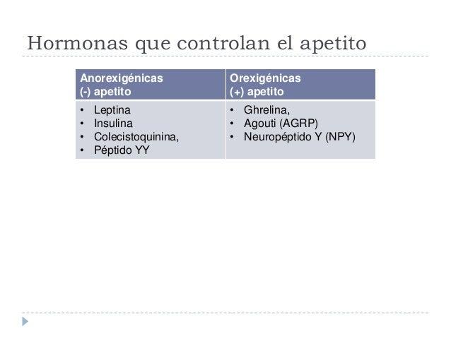 Páncreas Fisisología