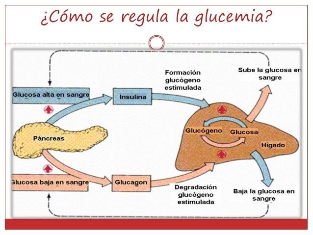Páncreas y glándulas suprarrenales power