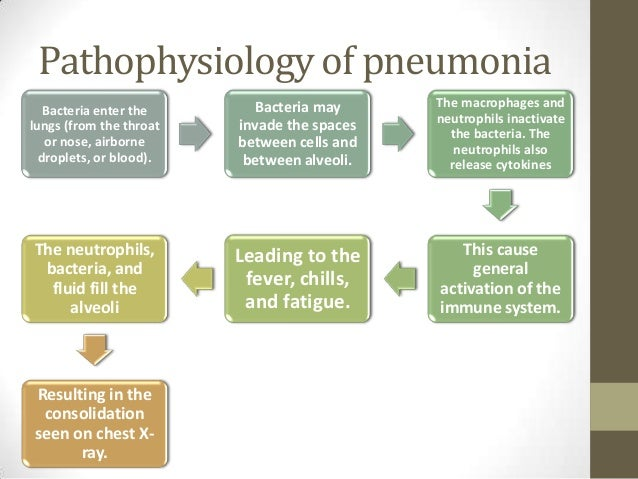 pathophysiology pneumonia Community acquired pneumonia: for medical residents gonzalo bearman md, mph • bacteriology and pathophysiology - typical vs atypical pathogens • therapy - inpatient vs outpatient • pneumonia severity index - therapy • outpatient, inpatient, icu.