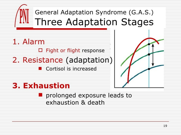 what are the stages of the general adaptation syndrome