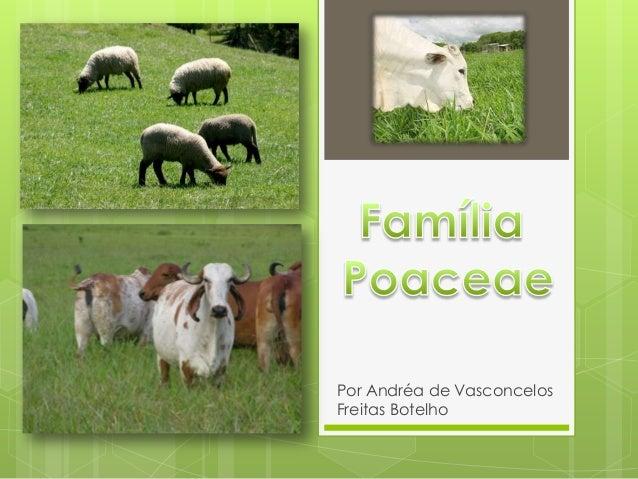 Por Andréa de Vasconcelos Freitas Botelho