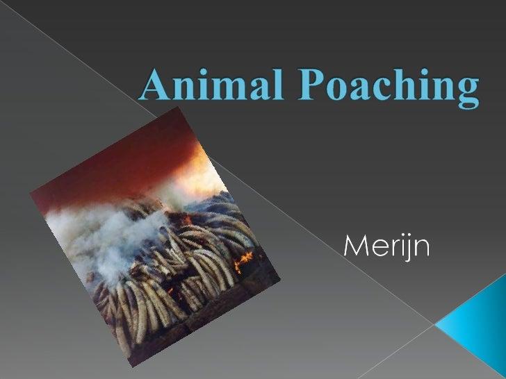 AnimalPoaching<br />Merijn<br />