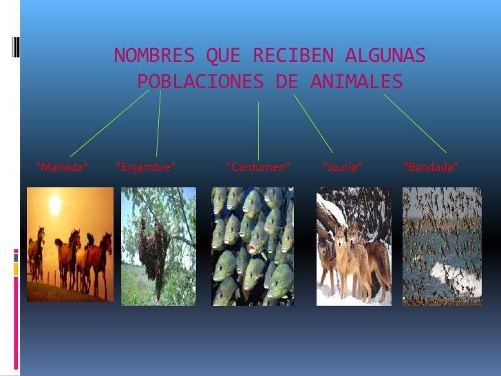 """NOMBRES QUE RECIBEN ALGUNAS             POBLACIONES DE ANIMALES""""Manada""""   """"Enjambre""""   """"Cardumen""""   """"Jauría""""   """"Bandada"""""""