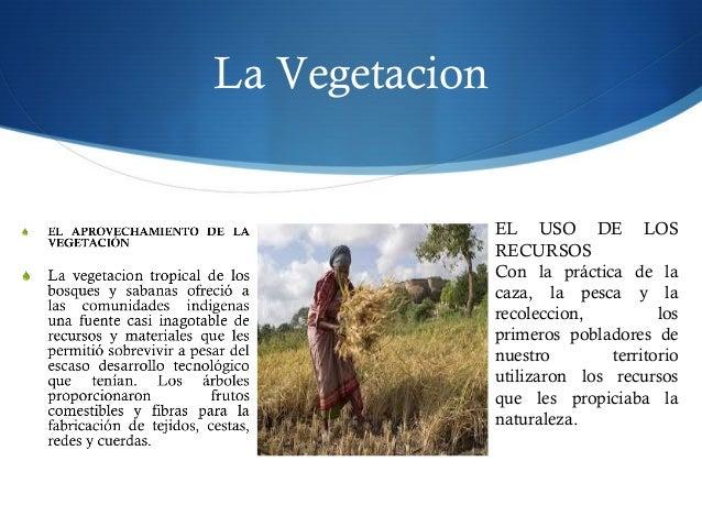 La Vegetacion EL USO DE LOS RECURSOS Con la práctica de la caza, la pesca y la recoleccion, los primeros pobladores de nue...