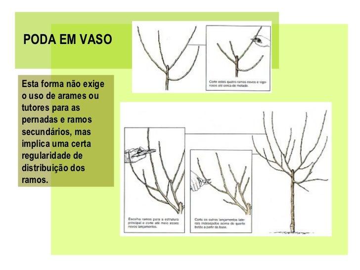 Poda de fruteiras pdf - Poda de hortensias epoca ...
