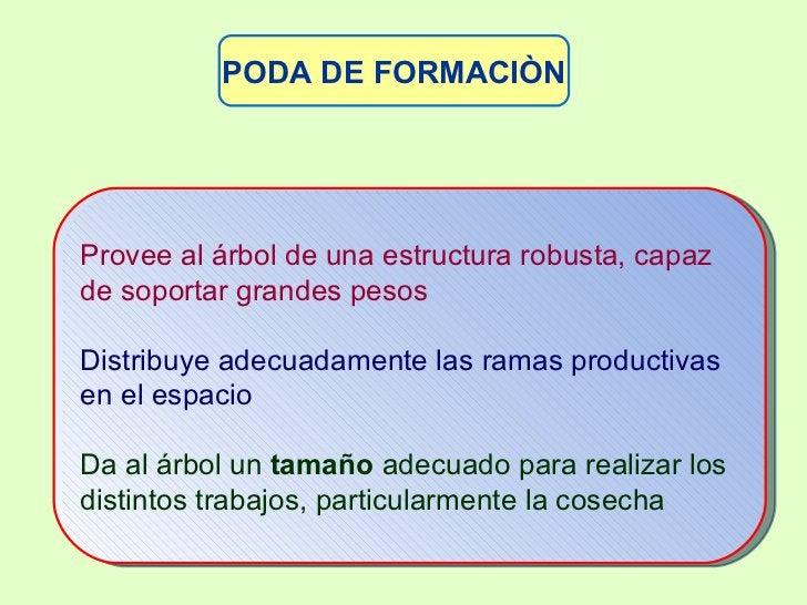 PODA DE FORMACIÒN <ul><ul><ul><ul><li>Provee al árbol de una estructura robusta, capaz de soportar grandes pesos </li></ul...
